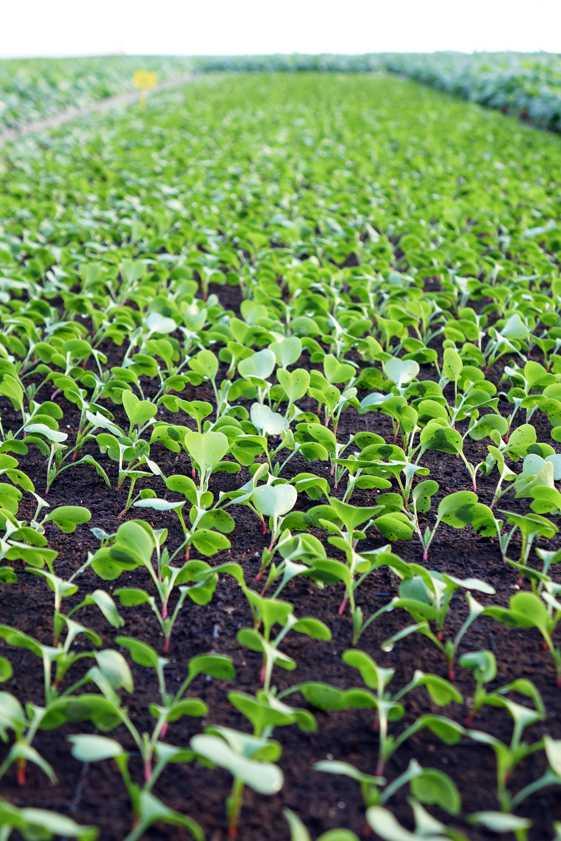 gartneri rådgivning